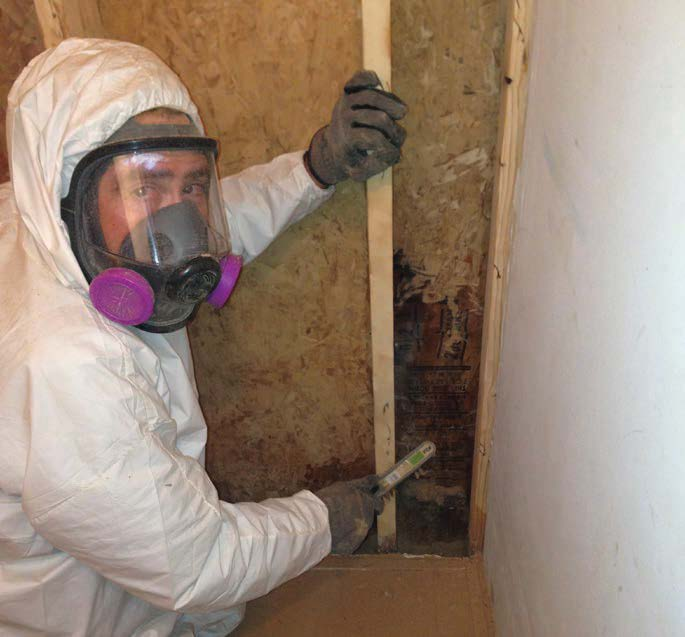 Getting Rid Of Mold Easily Said Than Done Fine